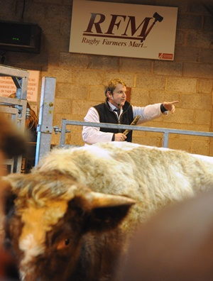 Head Auctioneer At Livestock Market Bids For National Title